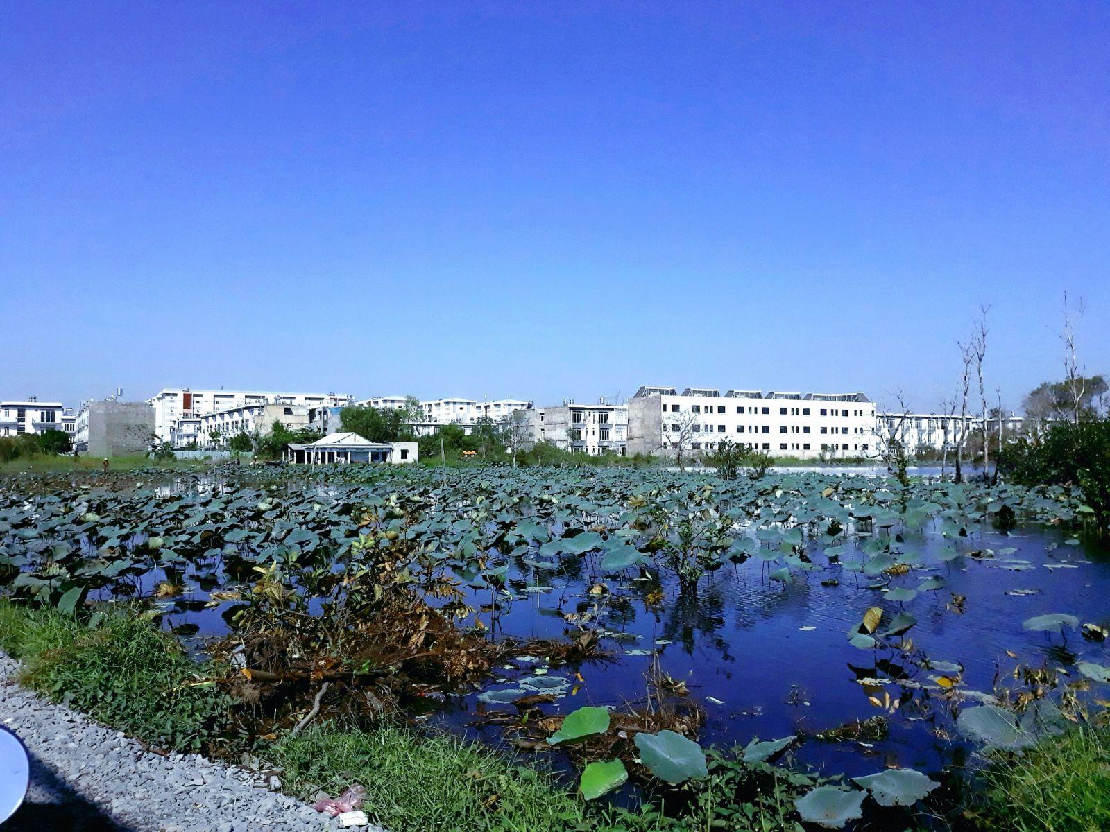 chung cư mỹ hanh cạnh view hồ sen